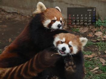 Panda0802_mi2