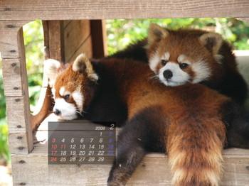 Panda0802_mi3