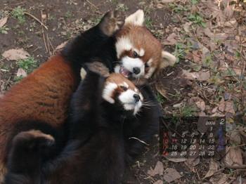 Panda_0802me2