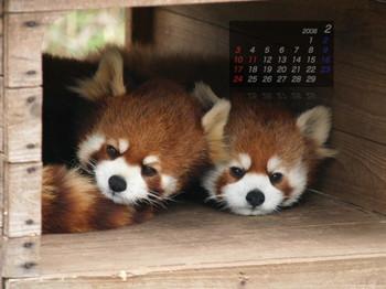Panda_0802mi1