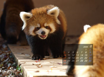 Panda0808_fm
