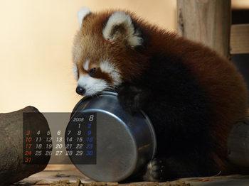 Panda0808_fr