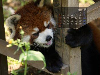 Panda0808_me