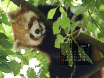 Panda0808_mk