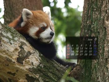 Panda0808_tk