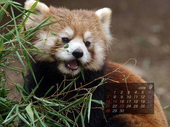 Panda0809_kr