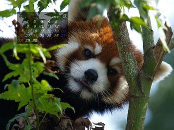 Panda0809_me