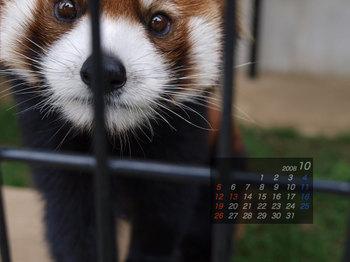 Panda0810_me