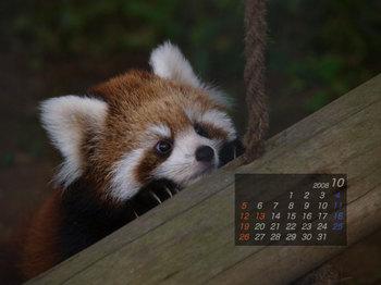 Panda0810_x1