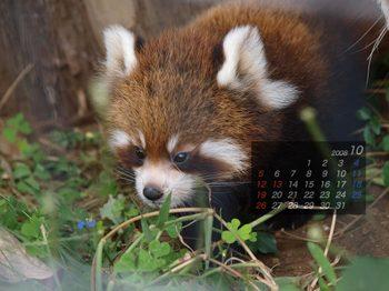 Panda0810_x2