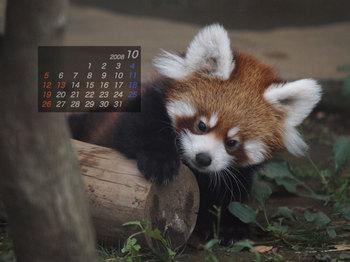 Panda0810_x3