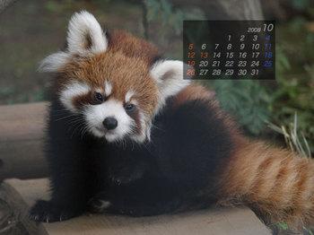 Panda0810_x4