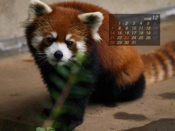 Panda0812_me