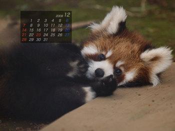 Panda0812_rn