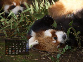 Panda0812_rr