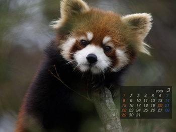 Panda0903_me
