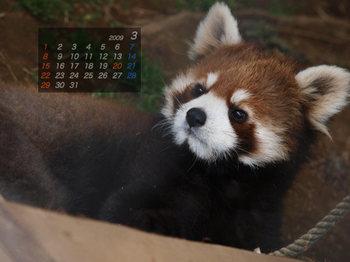 Panda0903_rn