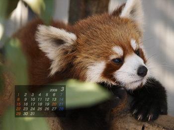 Panda0903_rr