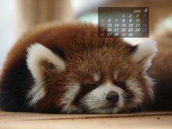 Panda0904_kt