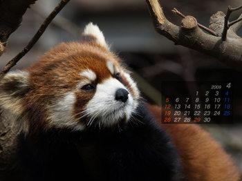 Panda0904_me