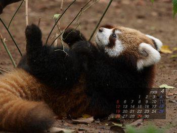 Panda0904_tt