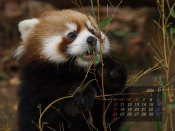Panda0905_fm