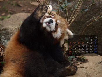 Panda0905_fr