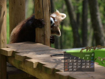 Panda0906_fr