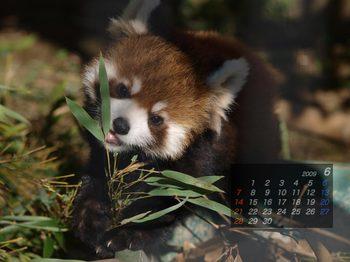 Panda0906_rn