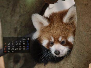 Panda0906_rr