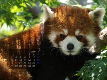 Panda0907_rn