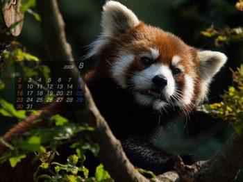 Panda0908_me
