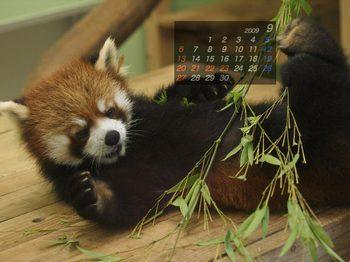 Panda0909_kt