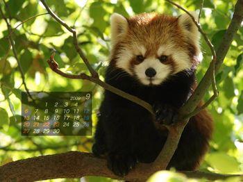 Panda0909_nt