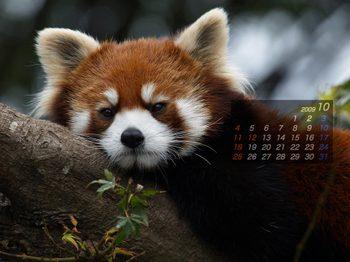 Panda0910_me