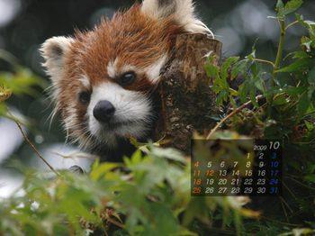 Panda0910_rn