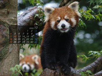 Panda0910_rr