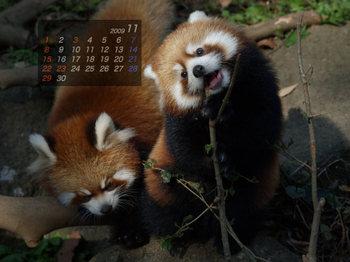 Panda0911_fm