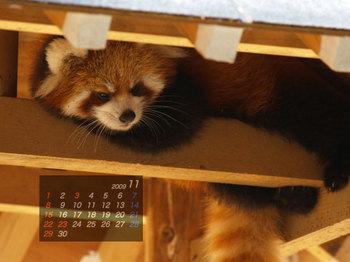Panda0911_fr