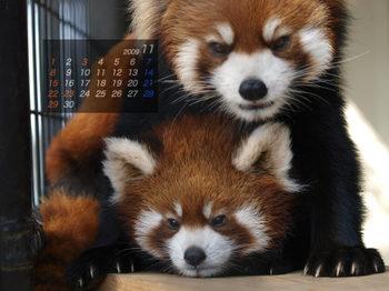 Panda0911_x5