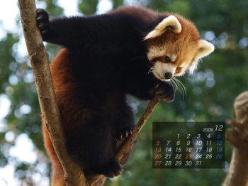 Panda0912_fm