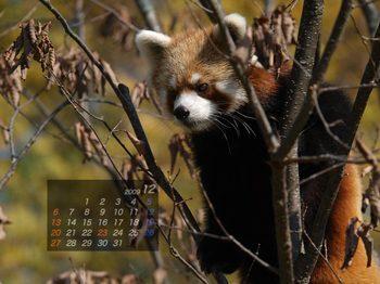 Panda0912_fr