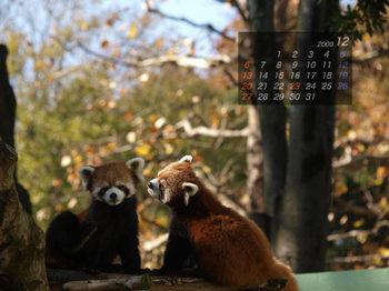 Panda0912_tt