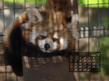 Panda0912_x6