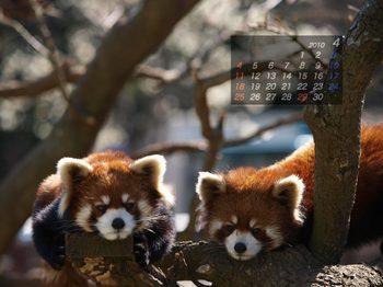 Panda1004_10