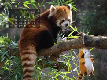 Panda1004_ru