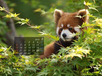 Panda1006_10