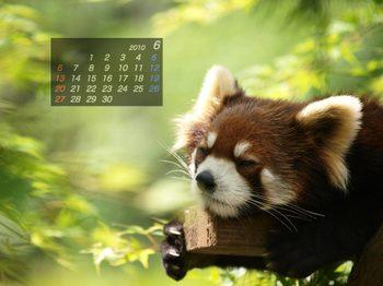 Panda1006_me