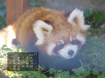 Panda1011_aq