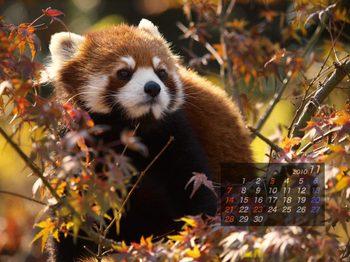 Panda1011_rn